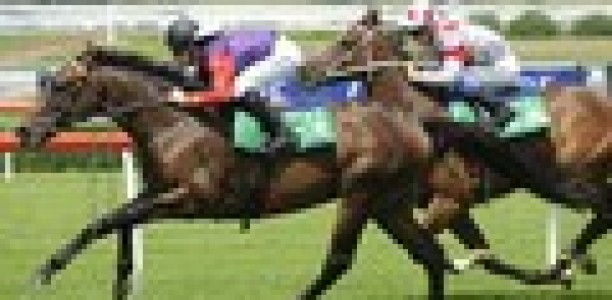 Estimate's poor showing rules Melbourne Cup out