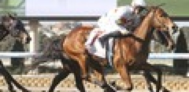 Griffiths to chase blacktype with Down The Hatch