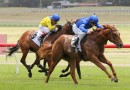 Hanseatic among early Blue Diamond Stakes favourites