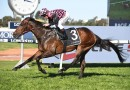 Star Queenslander Rothfire recovering well