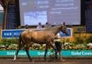 2021 Magic Millions Gold Coast Yearling Sale with biggest book to date
