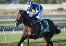 Gong could provide perfect autumn Passage