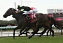 Scallopini to take on Jonker again in George Moore Stakes