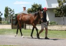 Rosemont Stars at Melbourne Premier Yearlings