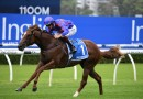 Boom 3YO heads early odds in the Moir Stakes