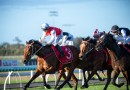 Talented stayers heads early odds in the Toowoomba Cup