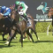 G3 Gloaming Stakes test for expensive colt